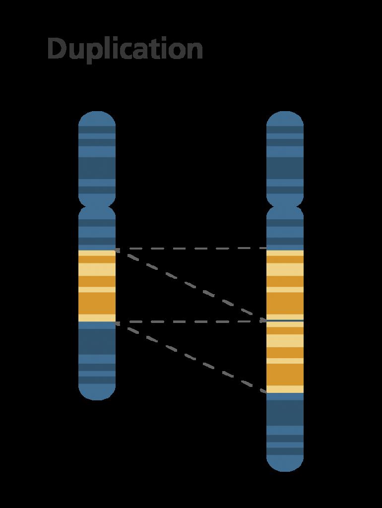 Chromosomal duplication