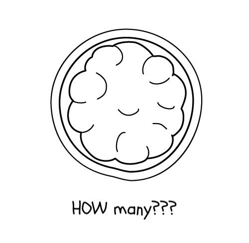 Morula: lots of cells