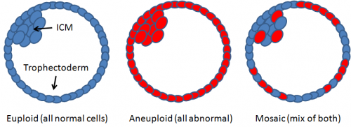 Difference between euploid, aneuploid, and mosaic embryos