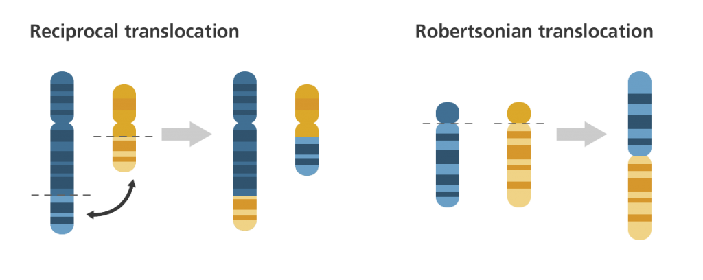 Reciprocal translocation and Robertsonian translocation in chromosomes